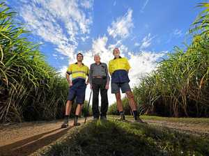 Last Coast cane farmers dealt another crushing blow