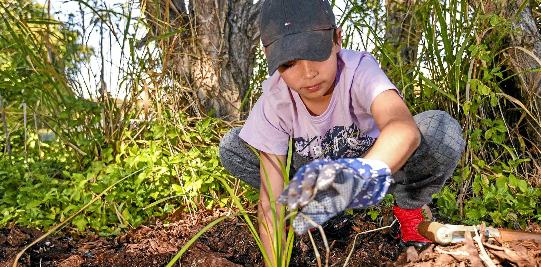 GROWING AWARENESS: Benjimack Bligh, 11, was hard at work planting one of the 200 trees and shrubs.