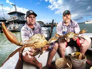 Mud crabbers 'fighting for survival'