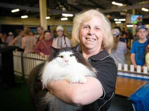 Cats have been preened to Ekka-cellent purr-fection