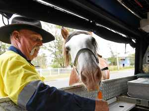 Criminal activity cripples Rocky horse business