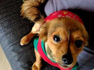 Family heartbroken after tiny pet dog dies in violent attack