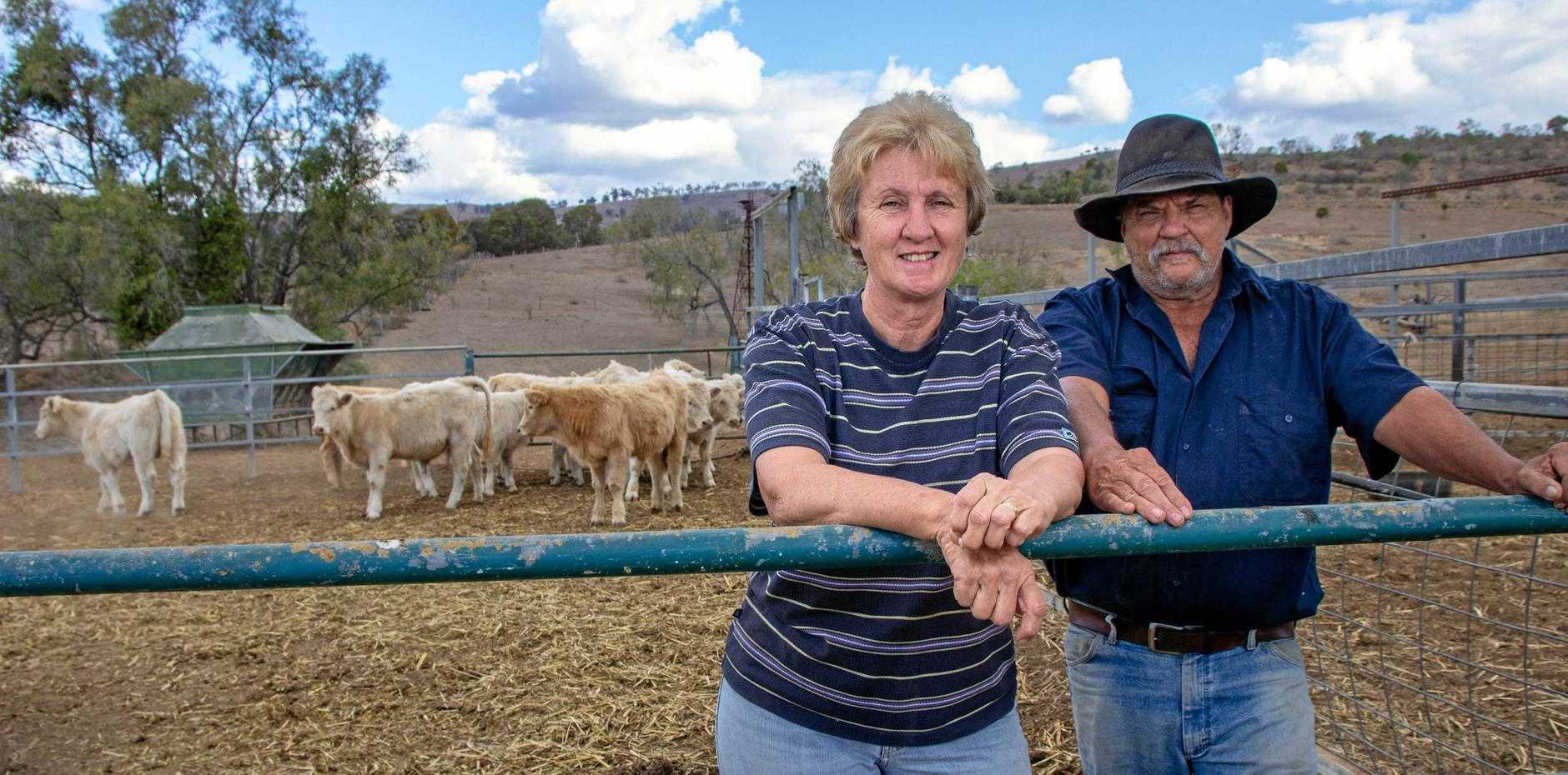 TOP SALE: Blenheim charolais Bull breeders Janice and Jim Spreadborough with next year's bulls.