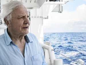 Foxtel's new channel for Attenborough fans