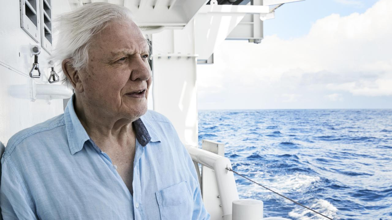 Foxtel's announced a new channel for Sir David Attenborough fans, BBC Earth. Picture: Alex Board