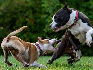 Trainer calls for calm approach to spate of dog attacks