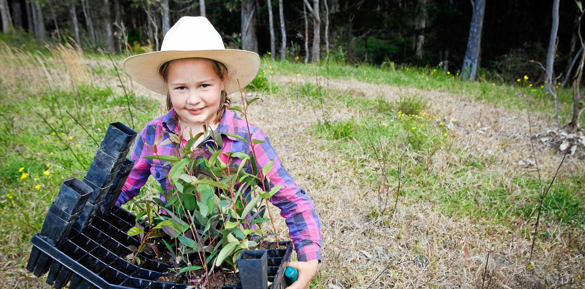 Little girl works with a plant box to help Landcare Australia.