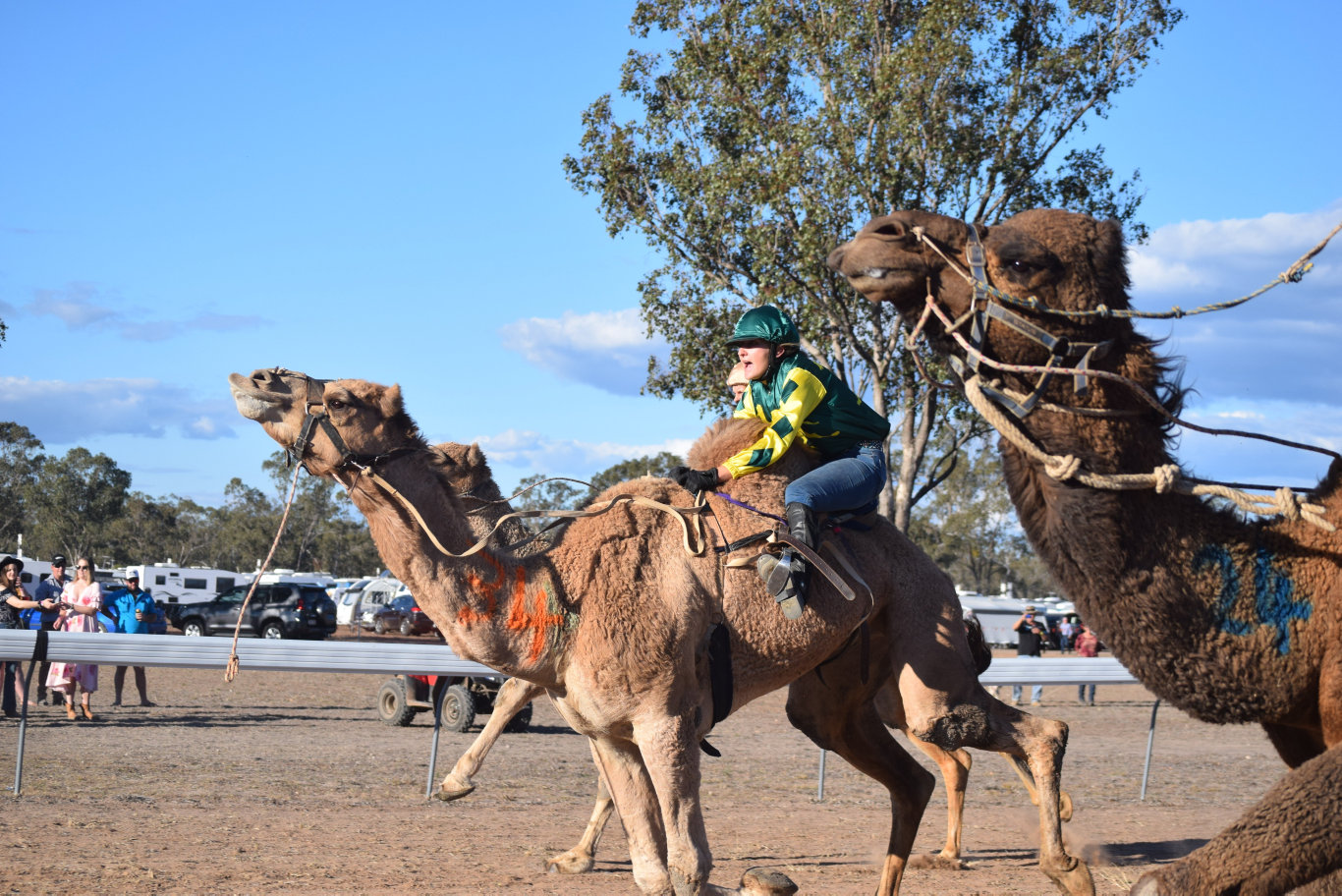 Action at the Tara Camel Races 03/08/2019