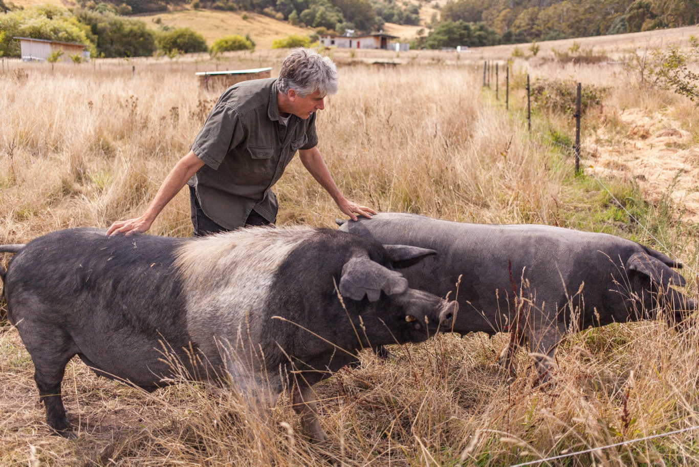 Matthew Evans with two pigs on his aptly named Fat Pig Farm in Tasmania.