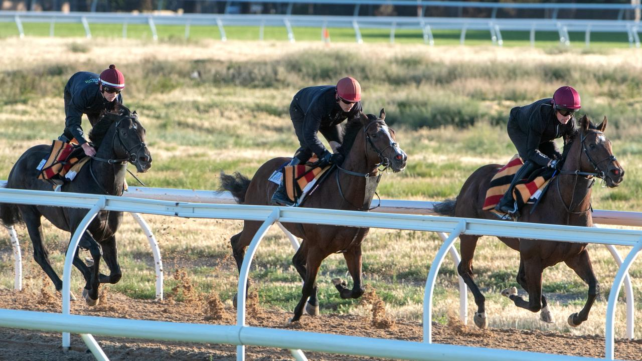 Three international raiders work at the Werribee Quarantine Centre last year.