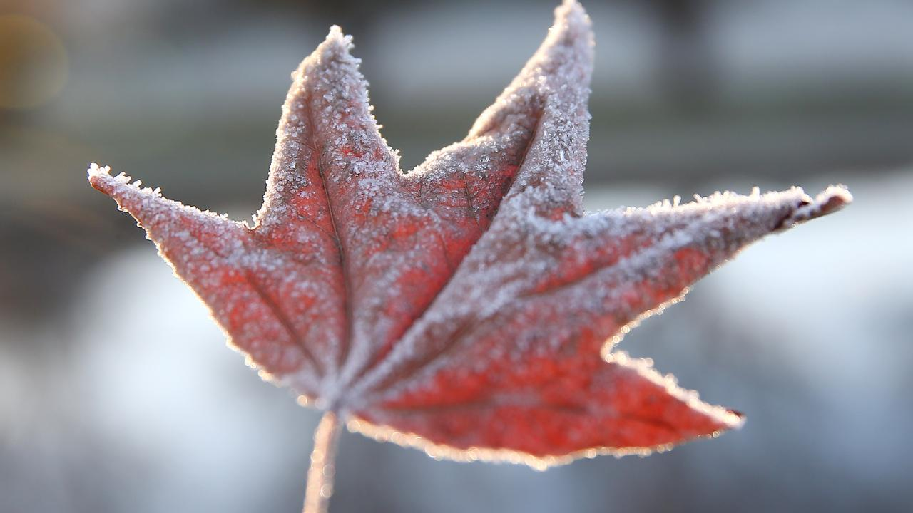 Stanthorpe is set to be the coldest place in the southeast, with frost predicted for this morning. Picture: Peter Wallis