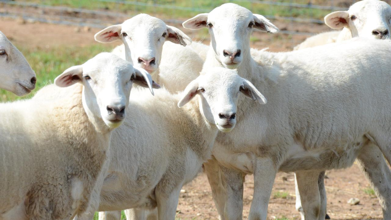 Sheep were stolen twice from a property at Bluewater.