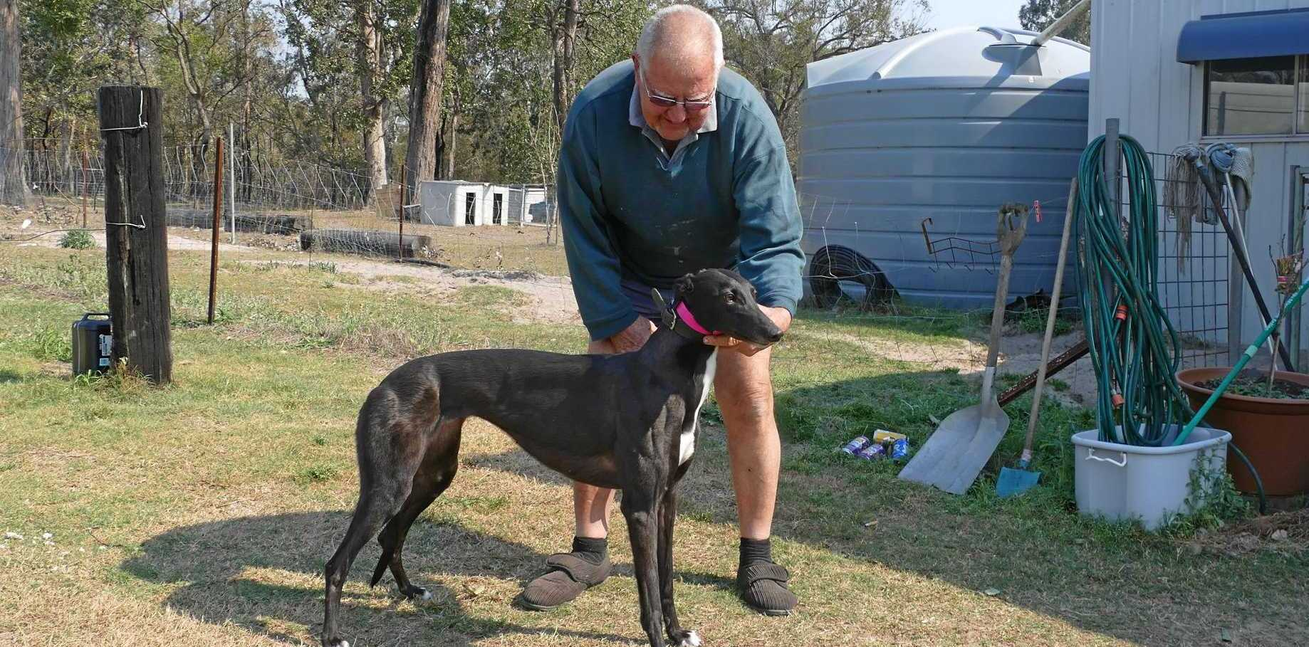 THANK YOU: Grateful Whiteman Creek greyhound trainer Len Harris has pledged Black Tinker's $1050 winner's cheque to local fireys who protected his property from bushfires at the weekend.