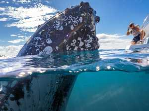 Curious whales feature in award-winning snap