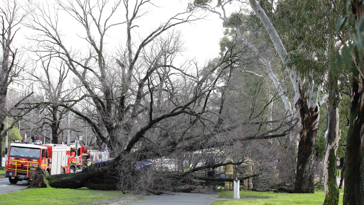 Woman hit by fallen tree on Royal Parade in Melbourne. Picture: Andrew Tauber