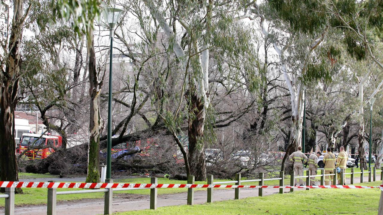 Emergency services assess a tree that fell in Melbourne, killing a woman. Picture: Andrew Tauber