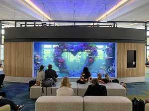 Coast company's airport aquarium delights travellers