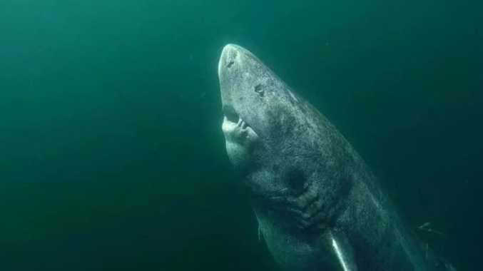 FOUND: 'Ancient' shark is world's oldest living vertebrate