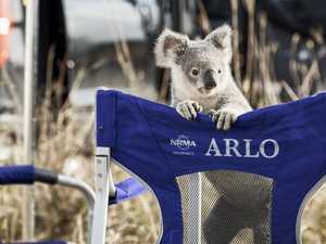 Highly-paid star koala makes generous donation