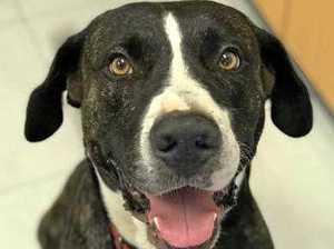 Final step in brutal North Mackay dog bashing case