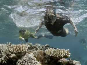 Minister denies the Great Barrier Reef is 'dying'