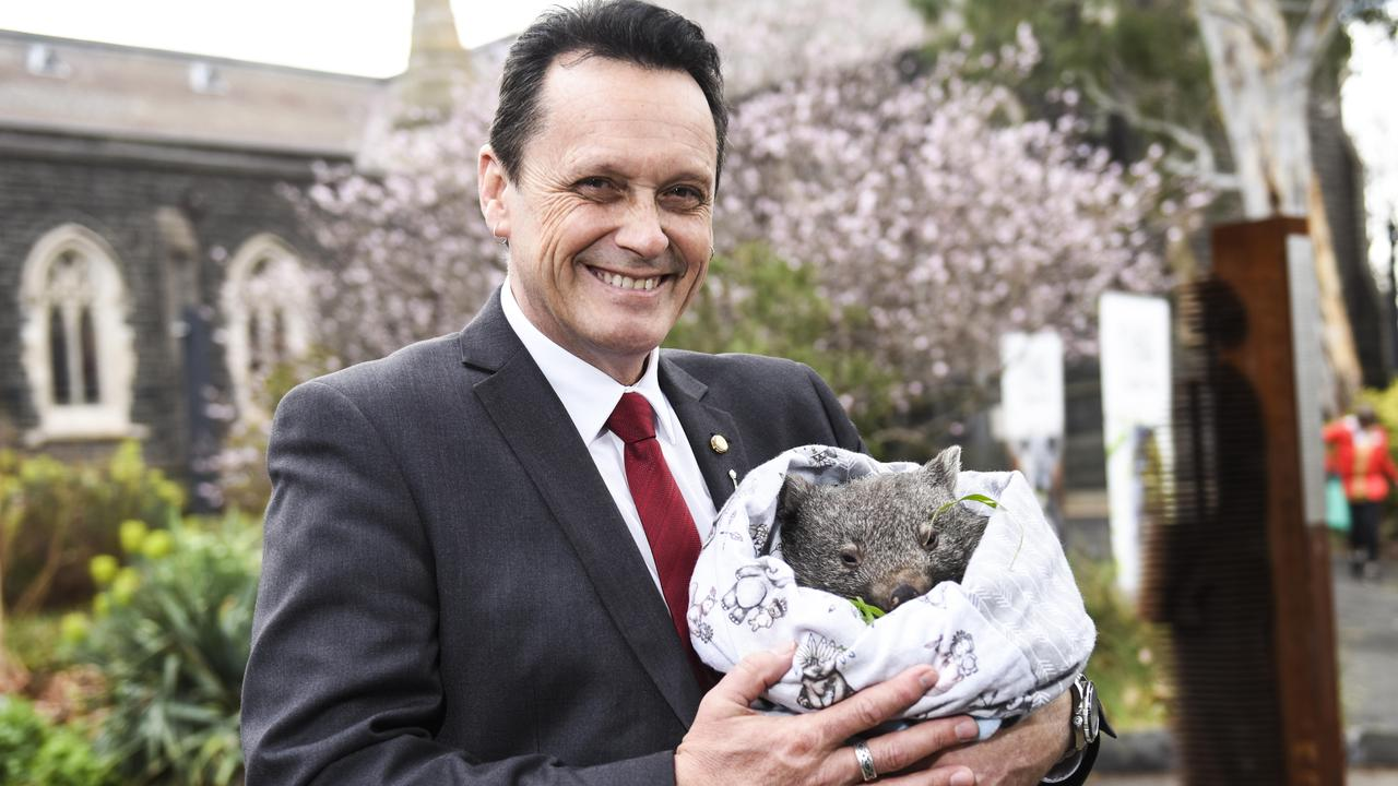 Victorian Animal Justice party MP Andy Meddick with a wombat at Abbotsford Convent, Melbourne. Picture: Dannika Bonser