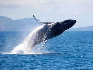 Have a whale of a time at the first Splashfest