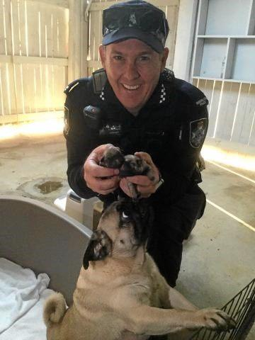 ON THE JOB: Bundaberg police Constable Leon Hart was thrilled to check up on some cute and furry puppies.