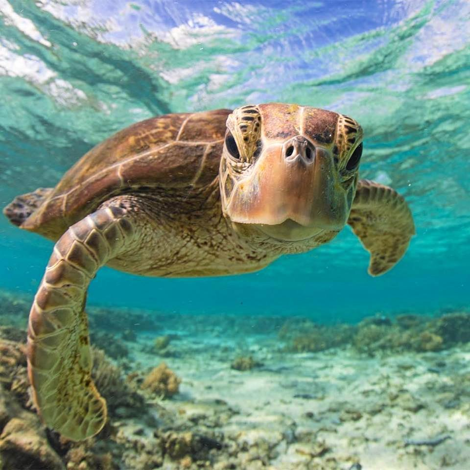 TOP SNAP: Photo taken by professional photographer Sean Scott at the Great Barrier Reef.