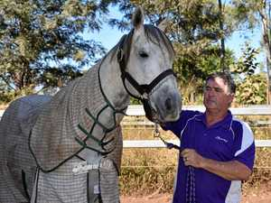 International Group 1 winner to stand at stud in CQ
