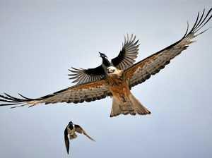 MASTERCLASS: Ipswich wildlife photographer shares secrets
