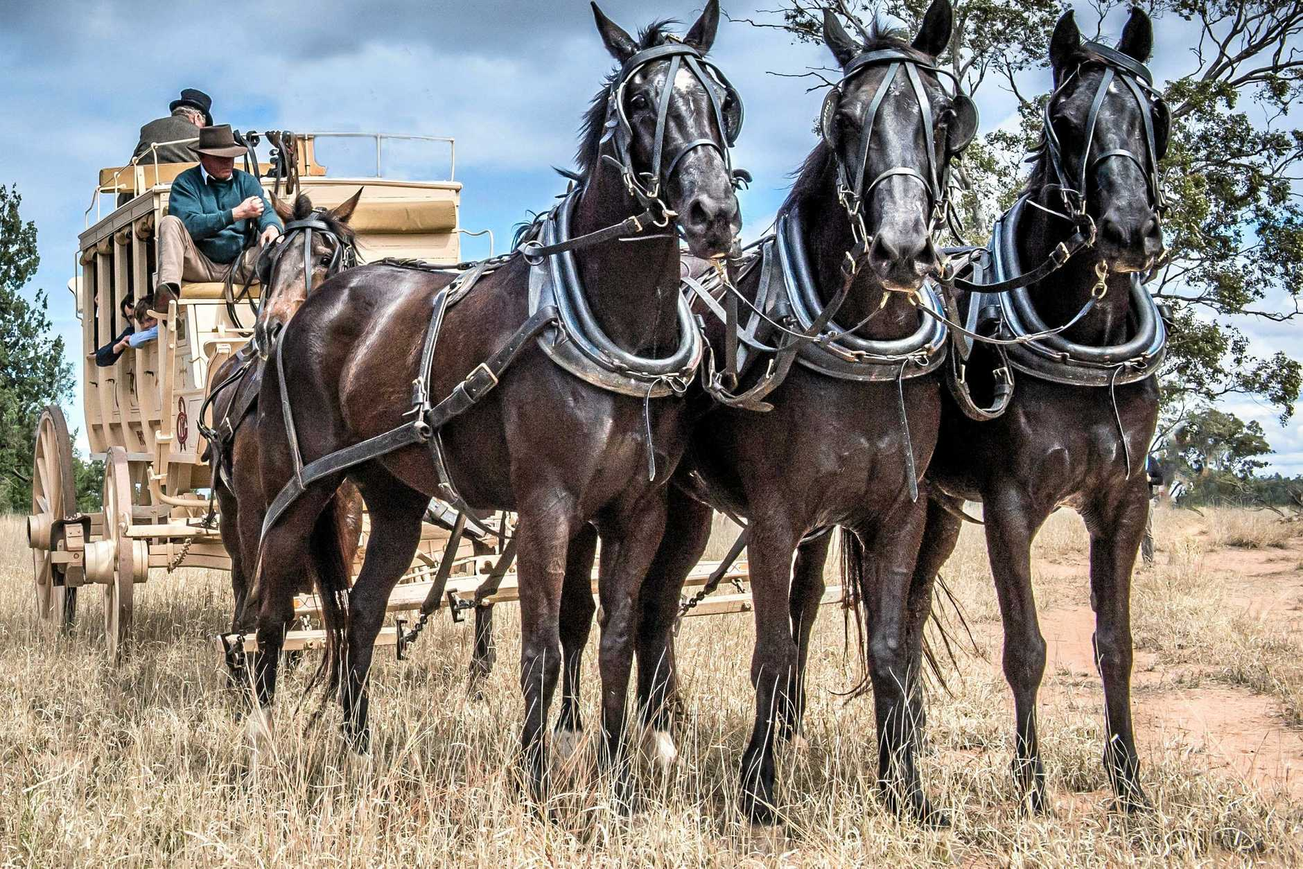 ROLLING ON: Don Ross is bringing his coach and horses to the Cobb and Co Festival.