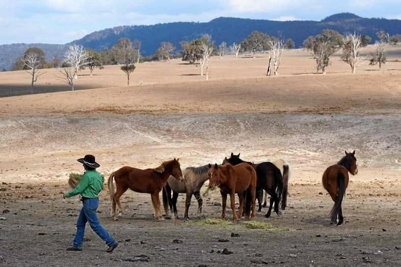 wild horses saved by kendall moore near stanthorpe drought dry