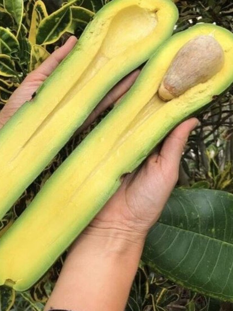 A Florida-based farm, Miami Fruit, has unveiled a very unusual-looking avocado. Source: Miami Fruit