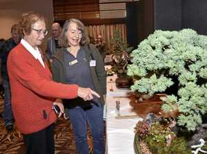 Bonsai Show, Toowoomba, August 18 2019