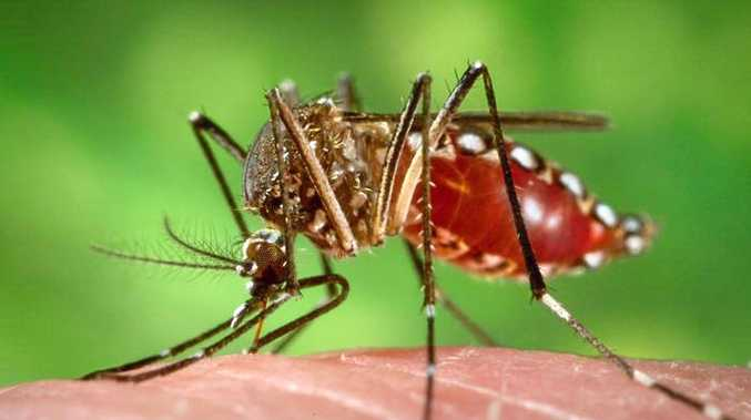 Dengue fever restrictions in Rockhampton finally lifted