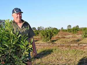 Tree change for a diverse future in Fraser Coast