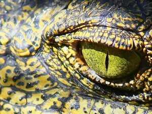 WATCH: Croc filmed swimming in harbour