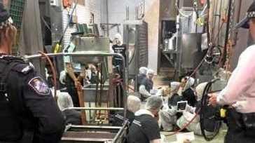 CRACKING DOWN: Vegan activists inside the Carey Bros abattoir earlier this year.
