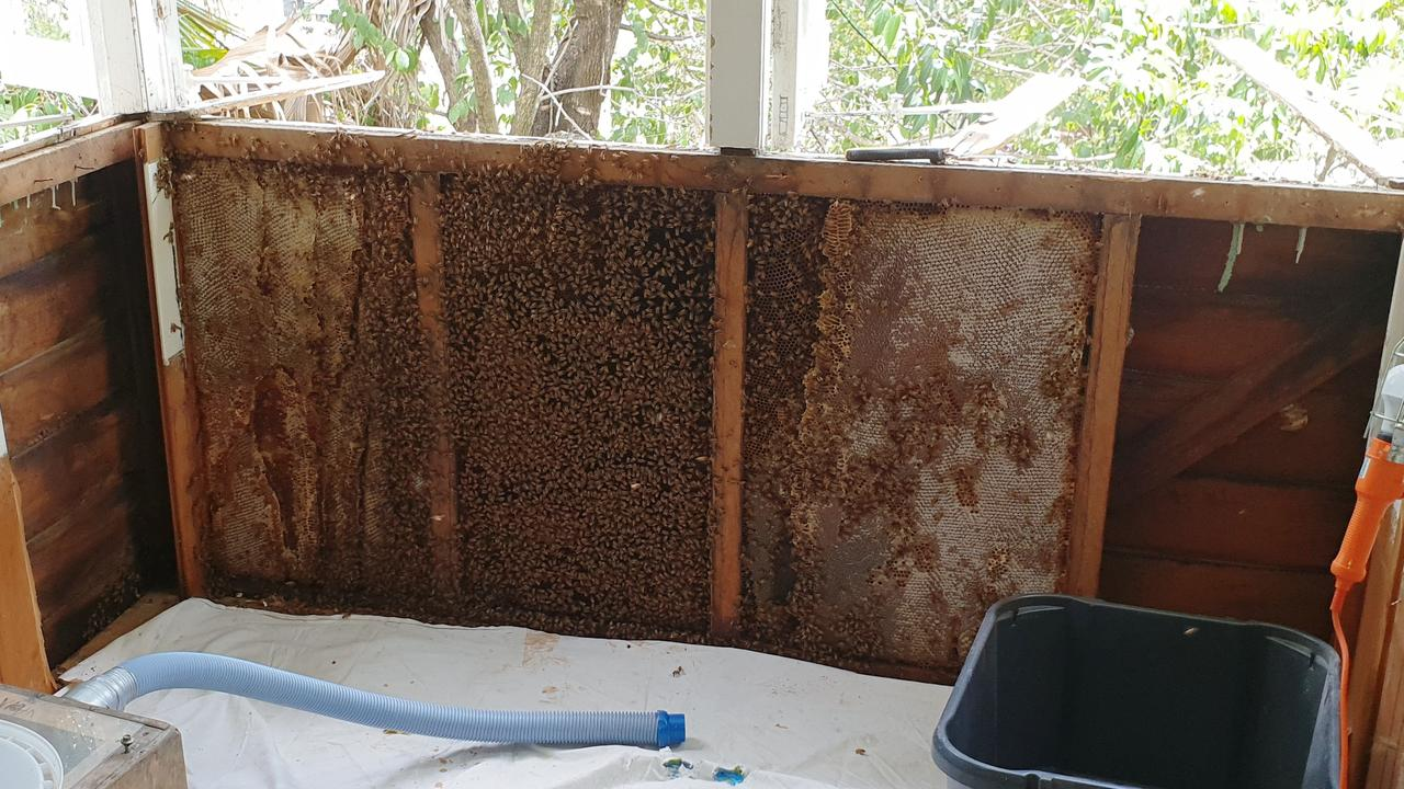 A hive of about 80,000 bees found in a bay window of a home at St Lucia. Picture: Brisbane Backyard Bees