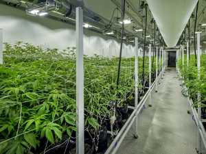 Council makes decision on $500m cannabis facility