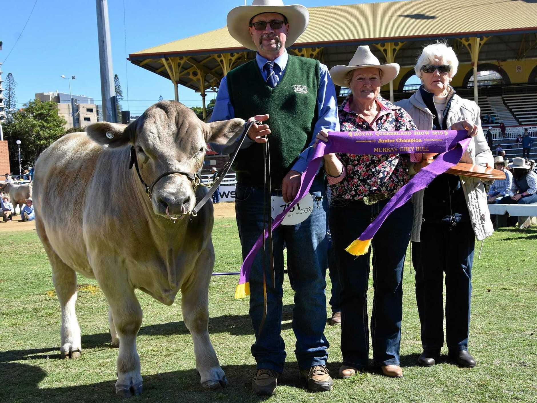 EKKA WIN:  Owner Marilyn Hanson with her winning bull Shell-Dee Batman, Dean Rasmussen, and the trophy donor.