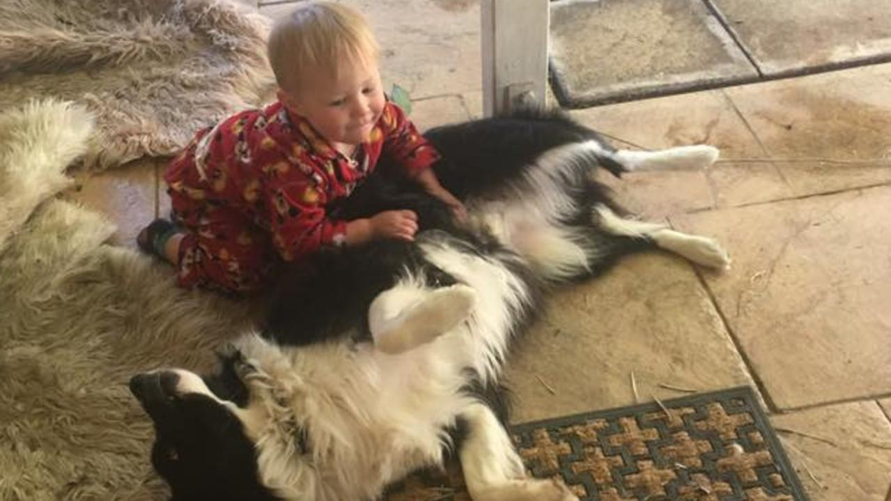 Alfie the border collie, pictured with then 2-year-old Mason Roebig, was allegedly found dead in his back yard. His family believes he was baited. Picture: