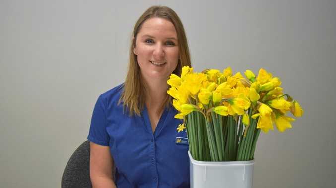 More than 40,000 daffodils ready for Bundaberg