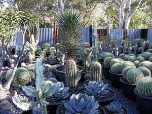 Spike in exotic garden design