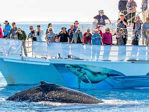 OPINION: Why whales are making a splash in Hervey Bay