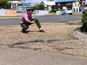Python crosses Targo Street