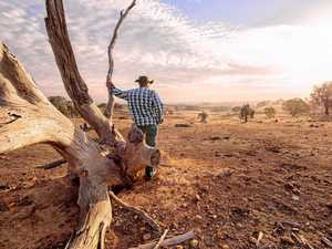 Farming suicides the painful cost of CQ's worsening drought
