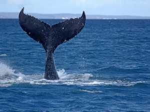 Sydney market key to Coast growth: tourism boss