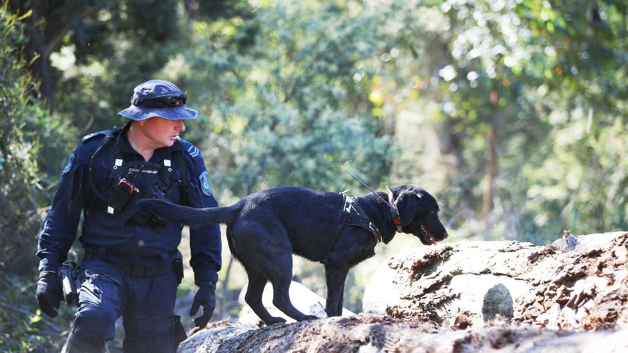A police officer with a dog investigates a sawmill on Herons Creek Road during the search for William Tyrrell north of Kendall. Credit: AAP